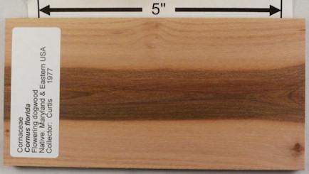 Shorn Su Lumber Syore